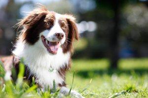 Dog smiling in park